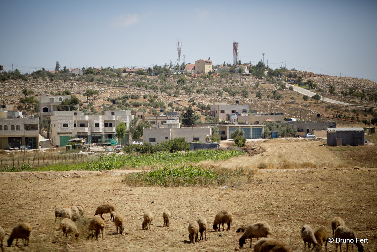 Settlers' violence and escalation: Médecins du Monde calls for the protection of Palestinian communities